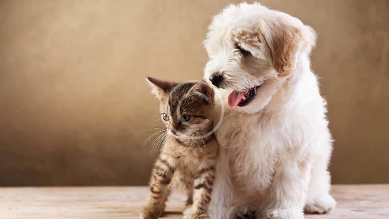 We Love Every Pet